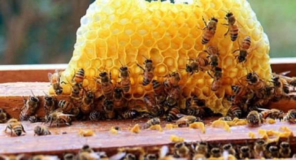 Ομιλία από τον καθηγητή Μελισσοκομίας Π. Χαριζάνη