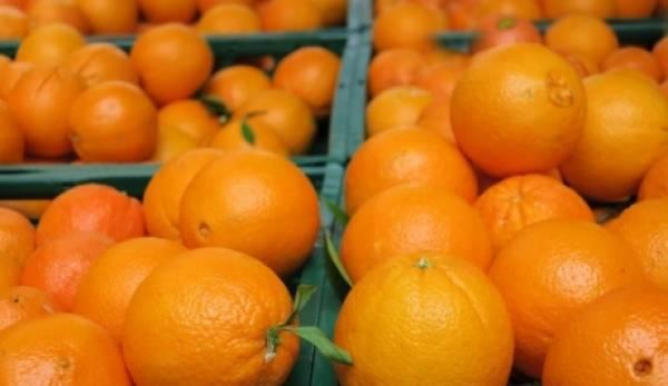 Πορτοκάλι Βαλέντσια στα 50 λεπτά η τιμή παραγωγού στη Λακωνία