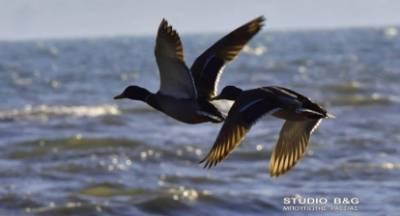Εκπαιδευτική δράση για τον εορτασμό της Ευρωπαϊκής γιορτής των πουλιών (photos&video)