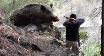Παράνομο κυνήγι αγριογούρουνου στην Ηλεία!