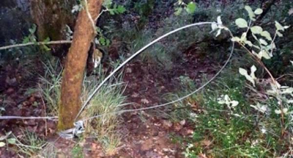 Παράνομες παγίδες για αγριογούρουνο στην Ηλεία