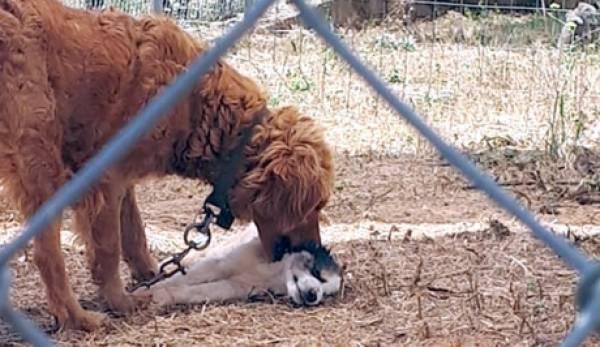 ΜέΡΑ25: «Παθητική κακοποίηση των αδέσποτων ζώων στα καταφύγια του Δήμου Σπάρτης»
