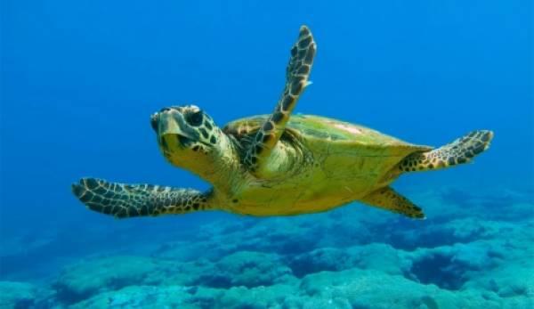 Έκκληση στις Αρχές και τους θαλασσινούς: Σώστε την caretta caretta στην Πελοπόννησο!