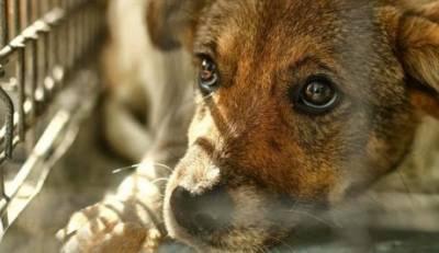 Στη Βουλή τα Καταφύγια αδέσποτων ζώων της Σπάρτης απο το ΜέΡΑ25!
