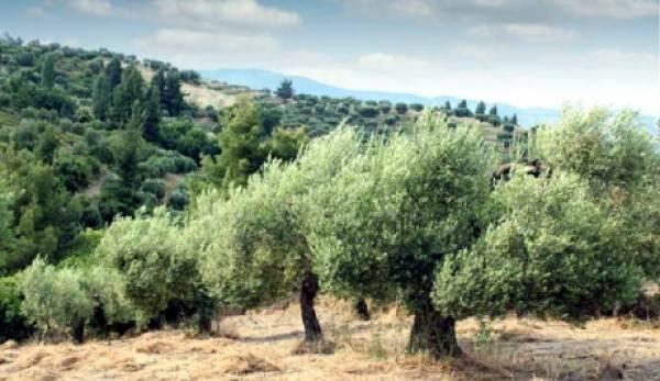 ΚΚΕ: Αποζημιώσεις στους αγρότες για χαλάζι, καύσωνα και παγετό, στην Πελοπόννησο