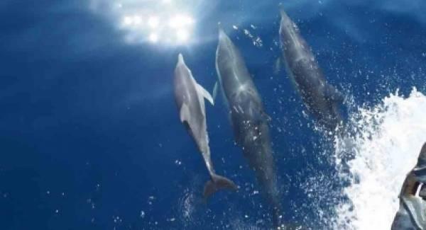 Συναρπαστικό: Δελφίνια παίζουν στ' ανοιχτά της Ζακύνθου! (video)