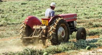Μένουν στα χωράφια τα καρπούζια της Πελοποννήσου με 0,07€/kg