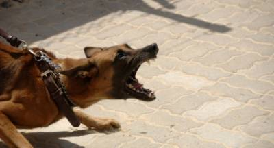 Γερμανικός σκύλος δαγκώνει παιδί και μάνα στo Παράλιο Άστρος