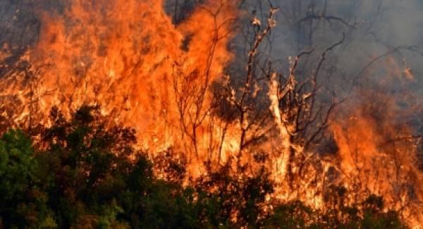 Σε εξέλιξη πυρκαγιά στις Κεχριές Κορινθίας (photos)