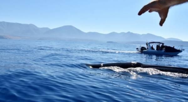 Τι συμβαίνει; Φάλαινα φυσητήρας μήκους 20 μέτρων στη Μάνη!