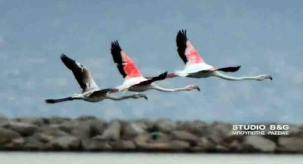 Όμορφες πινελιές ιπτάμενης ελευθερίας στο Ναύπλιο (photos)