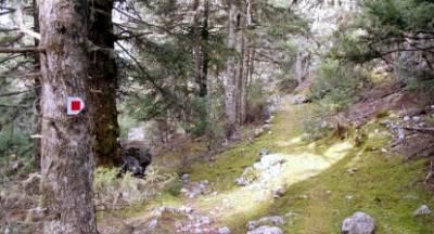 Ο Σύλλογος Πεζοπόρων - Ορειβατών Καλαμάτας «Ο Ευκλής» στο μαγευτικό φθινοπωρινό Μαίναλο