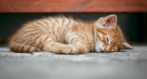 Πάτρα: Νέα κτηνωδία με έξι νεκρές γάτες!
