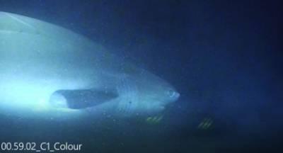 Ο καρχαρίας των Αντικυθήρων ανέχεται... το καλώδιο του ΑΔΜΗΕ
