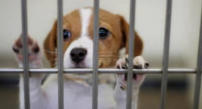ΜέΡΑ25: Είναι νόμιμα τα καταφύγια ζώων του Δήμου Σπάρτης;