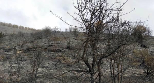Άνεμος, ανομβρία και ανθρώπινο λάθος παραλίγο να κάψουν το δάσος του Αγίου Πέτρου!