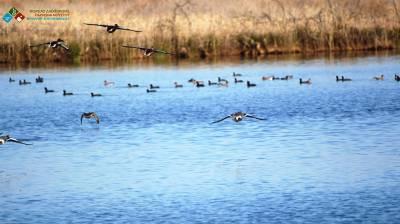 Οδηγίες για τον περιορισμό εξάπλωσης της γρίπης των πτηνών