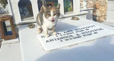 Το γατάκι που δεν φεύγει από τον τάφο των γερόντων που το είχαν… (video)