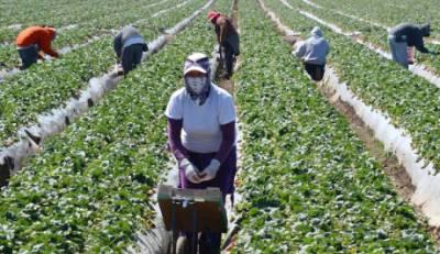 Συναγερμός στον ΕΟΔΥ: 5.000 εργάτες γης σε Ηλεία και Αχαϊα!
