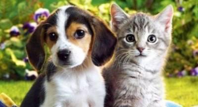 «Ψυχοπαθής» αποκεφαλίζει αφού κακοποιήσει κουτάβια και γατάκια στην Πάτρα