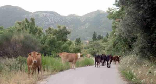 Βαριά πρόστιμα σε κτηνοτρόφους με «αδέσποτα» ζώα