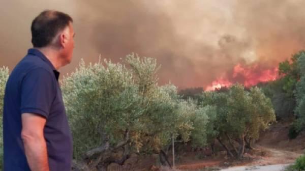 Κρητικός: Αναδασωτέες οι καμένες εκτάσεις σε Μάνη και γενικότερα τη Λακωνία