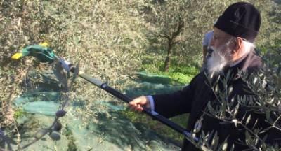 Ο Μητροπολίτης που στα 84 χρόνια του, οργώνει με τρακτέρ και μαζεύει ελιές