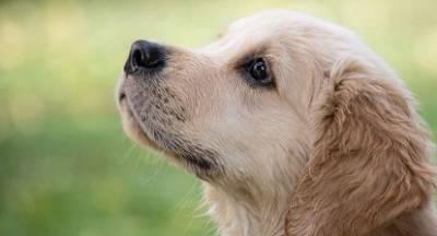 Η σκυλίτσα Σένκα μας χρειάζεται!