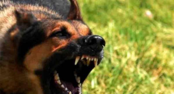 Άγρια σκυλιά κατασπάραξαν τον φύλακα στην Ηλεία!