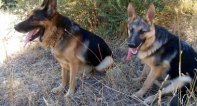 Είναι δυνατόν τα σκυλιά που φροντίζεις και αγαπάς να σε κατασπαράξουν; (video)