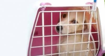 Αρνήθηκαν σε εθελόντρια την προστασία σε κουταβάκι που έτρεμε από αδυναμία και κρύο! (video)