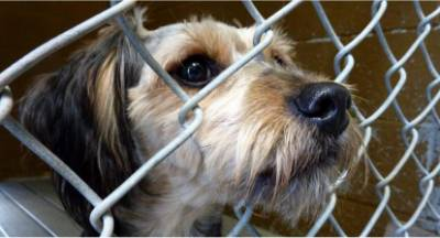 500.000€ στον  Δήμο Μεγαλόπολης για καταφύγιο αδέσποτων ζώων!