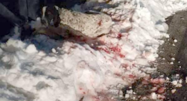 Σκληρές εικόνες! Εγκατέλειψαν αιμόφυρτο σκύλο στο χιόνι!