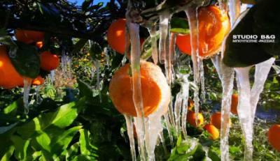 Παγετός σκέπασε τις καλλιέργειες της Αργολίδας (video)