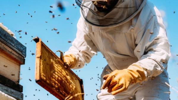 Καταληκτική ημερομηνία ένταξης μελισσοκόμων σε Δράσεις