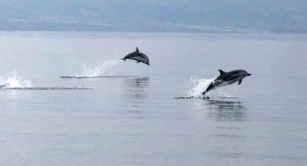 Δελφίνια στο Λουτράκι (video)