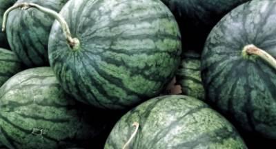 Εκτός ενίσχυσης λόγω κορωνοϊού τα όψιμα καρπούζια στην Ηλεία