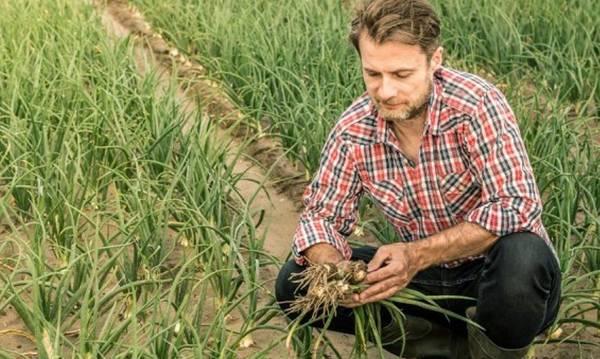 Γεωτεχνικοί θα συμβουλεύουν δωρεάν τους έλληνες αγρότες