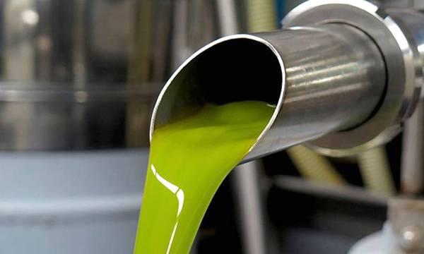 Μεγάλη η μείωση της παραγωγής βιολογικού ελαιολάδου στη Λακωνία. Ρευστά ακόμα τα επίπεδα τιμών!