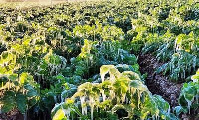 Χαρίτσης: Πάγωσαν πατάτα και καρπούζι στη Μεσσηνία!