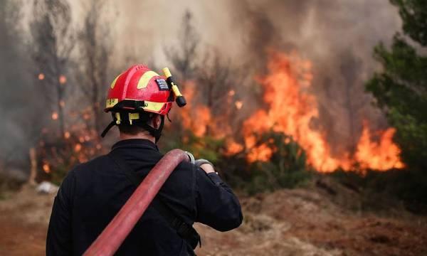 Πυρκαγιά σε δασικά της Ζαχάρως