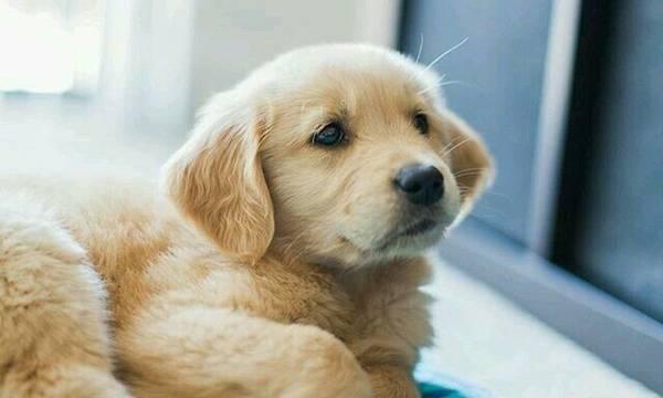 Ζώα συντροφιάς: Τέλος στην πώληση από pet shop