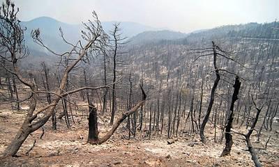 Μικρά πεύκα έκαψε η φωτιά στη Ζαχάρω