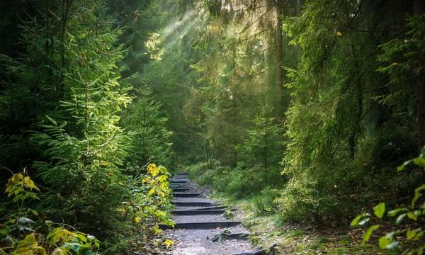 Τι προτείνει ο Θανάσης Δαβάκης για τους δασικούς χάρτες στη Λακωνία