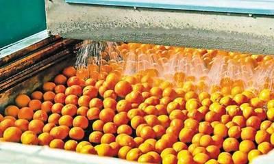 Τα χυμοποιεία δεν απορροφούν το πορτοκάλι της Αργολίδας