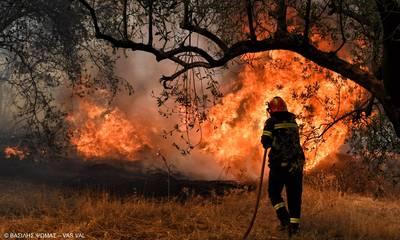 Πυρκαγιά στην Αιγιαλεία. Δίνουν μάχη 30 πυροσβέστες!