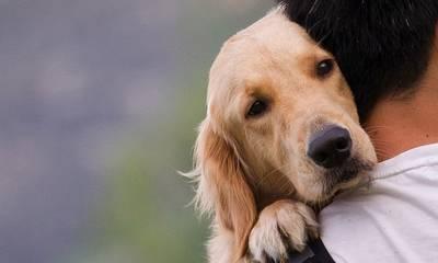 Αραχωβίτης: Παγκόσμια αντιεπιστημονική πρωτοτυπία το σχέδιο νόμου της Ν.Δ. για τα ζώα συντροφιάς