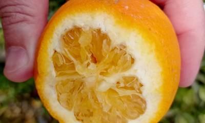 Αραχωβίτης: Η κυβέρνηση να αντιμετωπίσει άμεσα και όχι επικοινωνιακά τις ζημιές στο πορτοκάλι