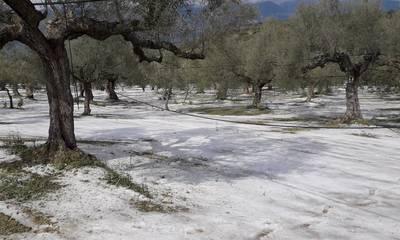 Χαλάζι: Ο ΕΛΓΑ δεν βλέπει ζημιά, οι αγρότες απαιτούν και ο Κρητικός περιμένει…