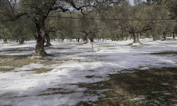 Π. Δούκας: Να προσαρμοστούν οι αποζημιώσεις στις πραγματικές ανάγκες των αγροτών